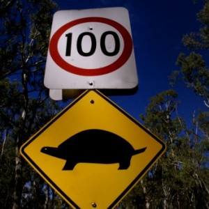 Slow road or Fast Lane – Goals need nurturing